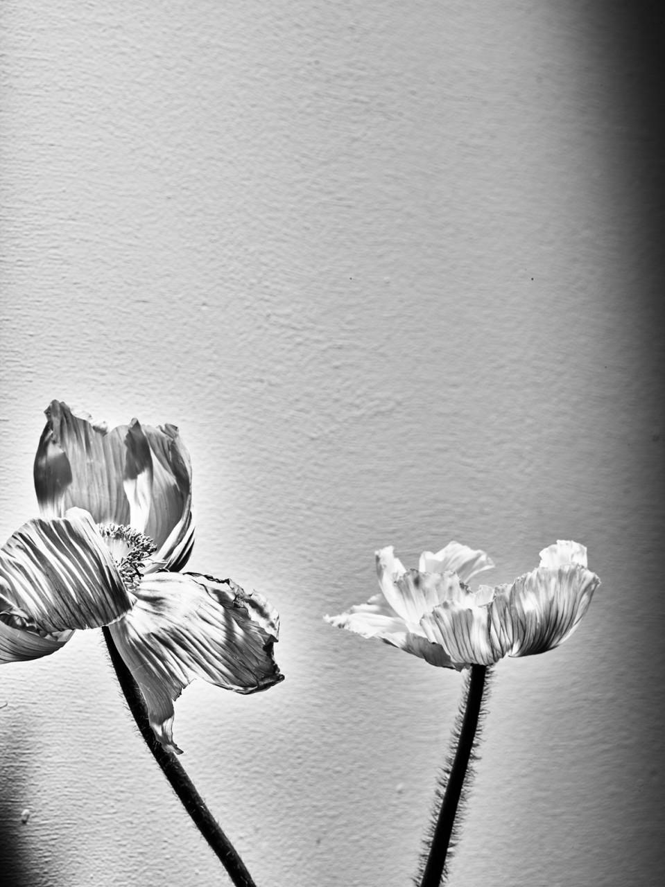 Flowers01201674311