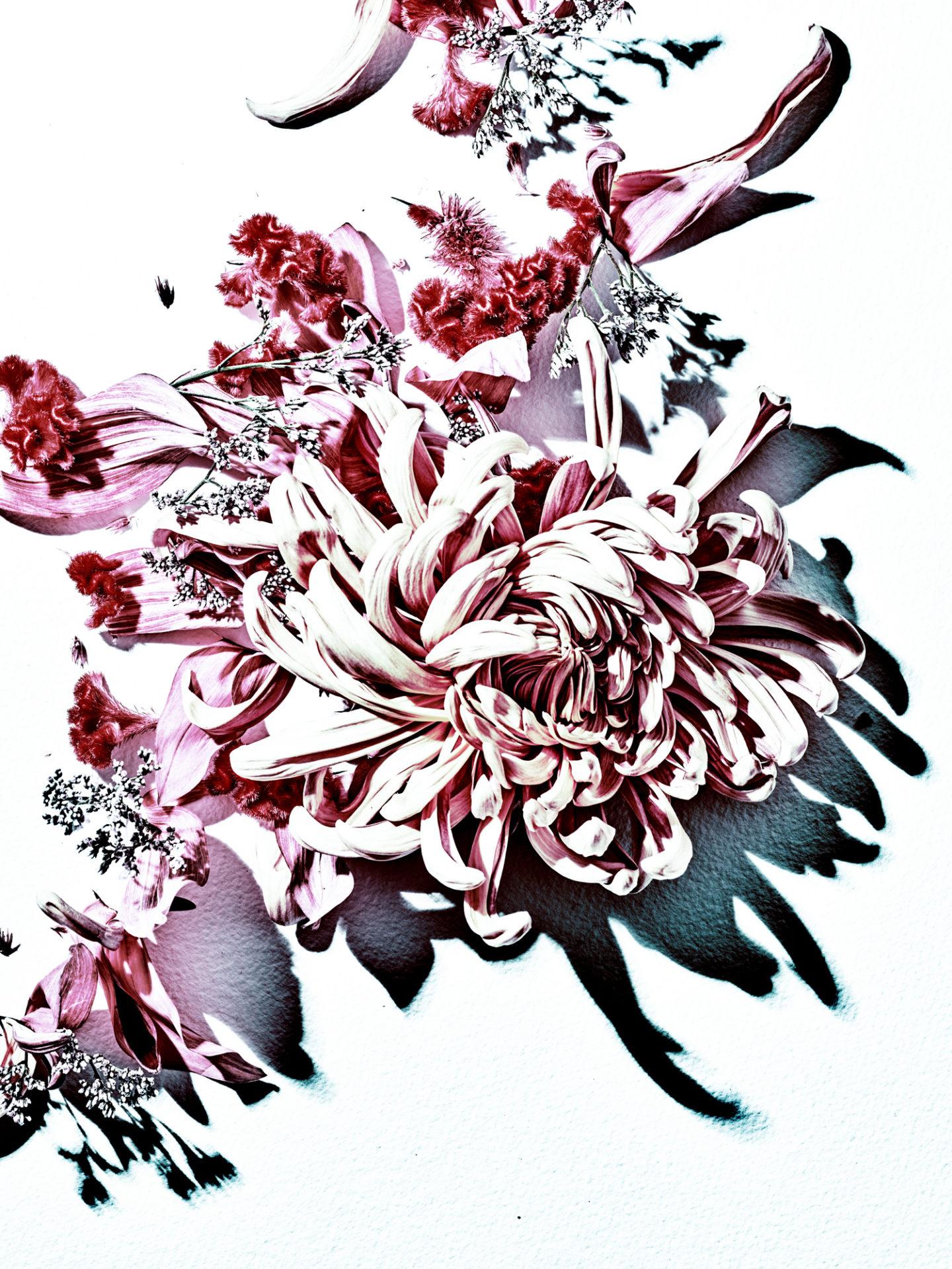 PAPER Flowers 01