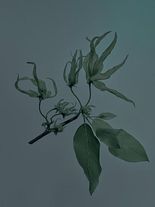 candice-milon-11