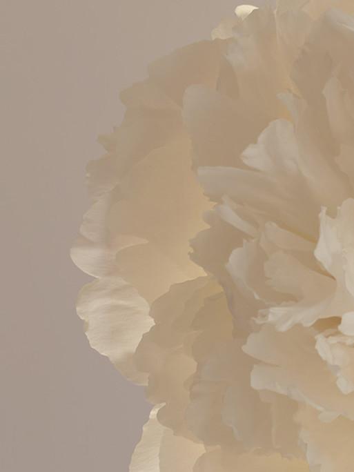 candice-milon-flowers-1