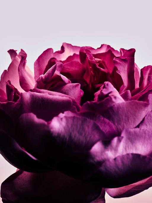 candice-milon-rose